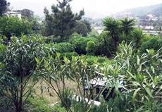 Garten, Ferienwohnungen Casa Matorella, Capoliveri/Lido, Insel Elba
